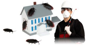 EXPRESS PEST CONTROL TREATMENT- 6 MONTHS WARRANTY