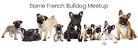 Barrie French Bulldogs