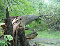Tree Removal / Pruning, Log Removal / Storm Clean Up