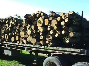 Split $225 & hardwood firewood logs $125 902-440-5687 Gerry