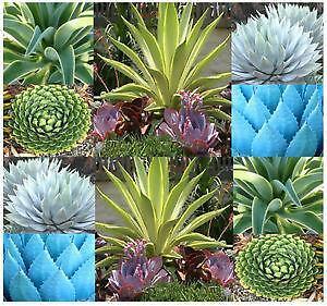 Indoor Plants | eBay