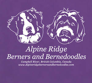BERNEDOODLES WITH EXCITING COLOURS COMING SOON !!