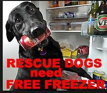 WANTED FREE FREEZER FOR RESCUE DOGS MEAT & BONES Logan Reserve Logan Area Preview