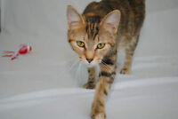 Muffi, adorable cat for adoption