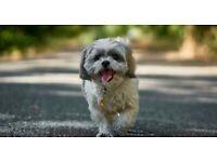 LETS GO WALKIES AYRSHIRE DOG WALKING & SITTING SERVICES