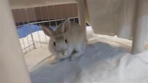 "Baby Male Rabbit - New Zealand: ""Squiggle"""