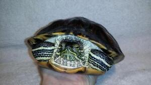 """Adult Female Scales, Fins & Other - Turtle: """"Squirtle"""""""