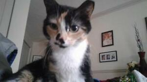 "Adult Female Cat - Calico: ""Penelope"""