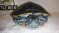 """Adult Male Scales, Fins & Other - Turtle: """"Gray"""""""