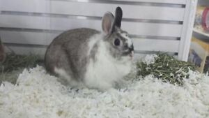 "Adult Female Rabbit - Bunny Rabbit: ""Bugs et Lola"""