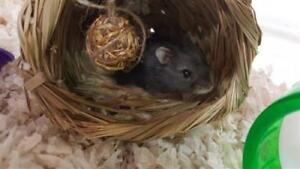"""Young Female Small & Furry - Hamster: """"Tim Bit"""""""