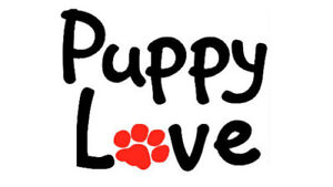 Puppy love ——  Daycare and Petsitting  services