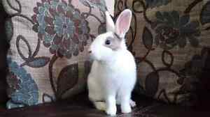 Hoppy Hearts Rabbit Rescue London Ontario image 5