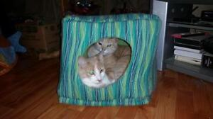 """Young Male Cat - Domestic Short Hair - orange and white: """"Larry"""" Kawartha Lakes Peterborough Area image 3"""