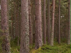Wood trunks wanted