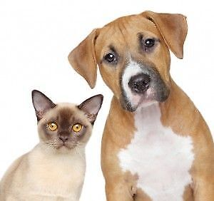 Experienced Pet Sitter Available In Markham