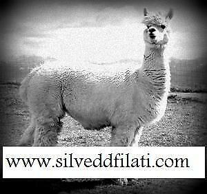 Silvedd Filati