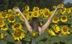 Sunflower Surroundings