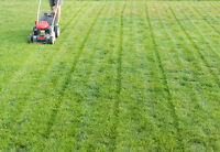 tonte de pelouse (gazon)