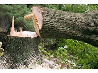 Tree surgeon tree felling removal