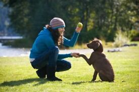 experienced Puppy & Dog trainer, behavioural training