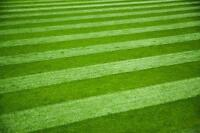 Lawn Care / Mowing / Grass