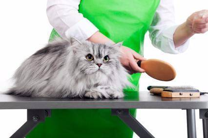 grooming - book your cat/dog today!
