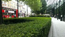 Landscape Gardener with 7 year experience, central/west London hands on & manage own projects
