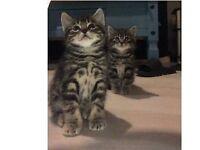 5 Kittens left ready now