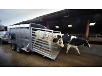 new 12x 6 Indespension livestock trailers - SAVE £400+VAT OF THE R.R.P