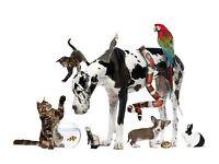 Pet sitter / dog walker available