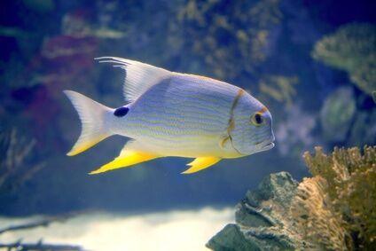 aquaristikundzoowelt