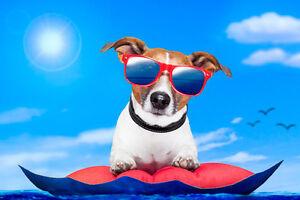 Pension pour chiens-les petites pattes (milieu familial)