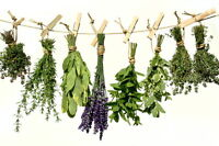 Intro to Herbs & Preparing your Medicine Bag - Bloomfield
