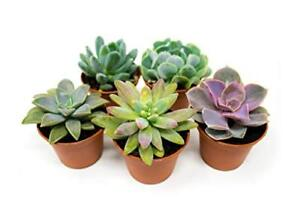 Variety of House Plants