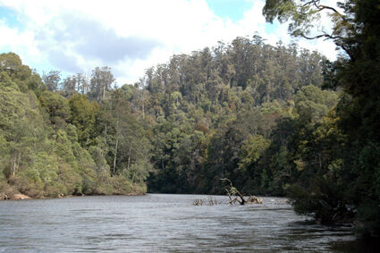 Further reduced 75 acres riverfront rainforest in NW Tas' Tarkine Trowutta Circular Head Preview