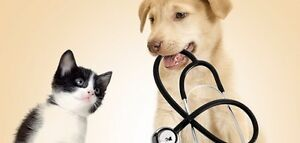 Give your pet the ultimate wellness experience!