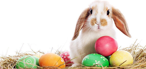 Easter extravaganza craft gift sale events st johns kijiji listing item negle Image collections