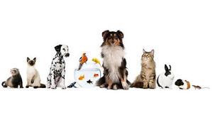 garderie pension pour chien, chat