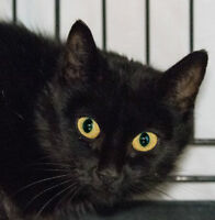MEOW Foundation's Little Foxi Looking for a Loving Home!