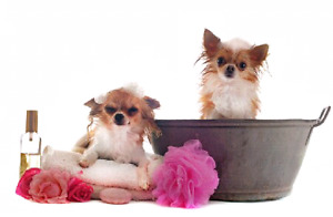 24/7 Dog Grooming, we TAKE CARE of your best friend.
