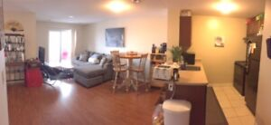 """Brand new """"Revo"""" apartment for rent! Friendly roommate needed :)"""
