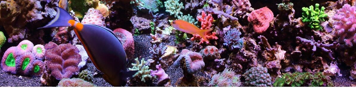 Reef-Starters