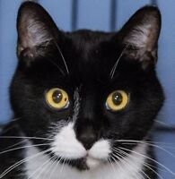 MEOW Foundation's Lovely Chatty Looking for His Forever Family