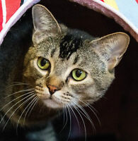 MEOW Foundation's Lucky Lark Looking for a Puuurfect Home!