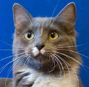 MEOW Foundation's special Mouse looking for purrfect home!