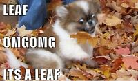 Leaves Are Falling! We Got You Covered So Your Lawn Doesn't!