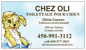 Salon de Toilettage chez Oli (Granby)