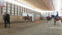 Kids Horse Day Camps