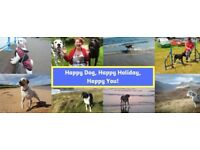 Barking Mad Home Dog Boarding Holiday Care